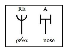 REA nose