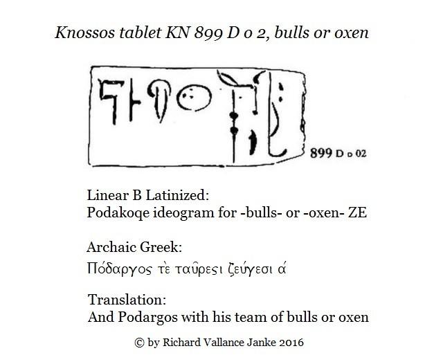KN 899 D o 22 oxen ZE