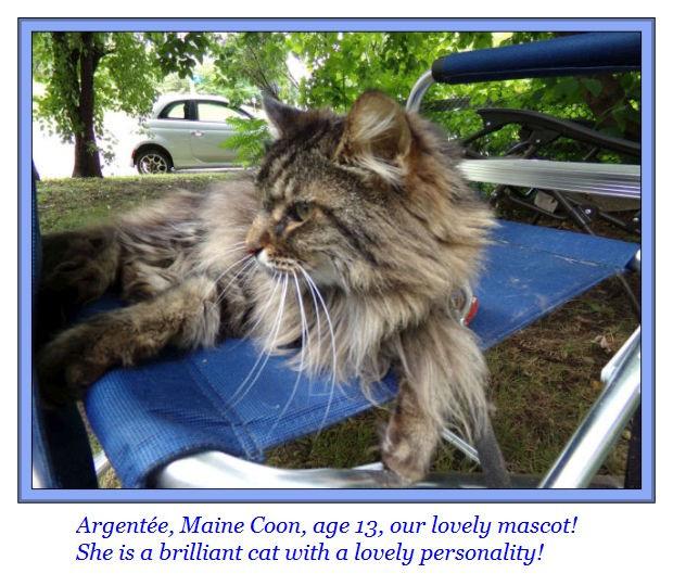 Argentee cat Mine Coon mascot