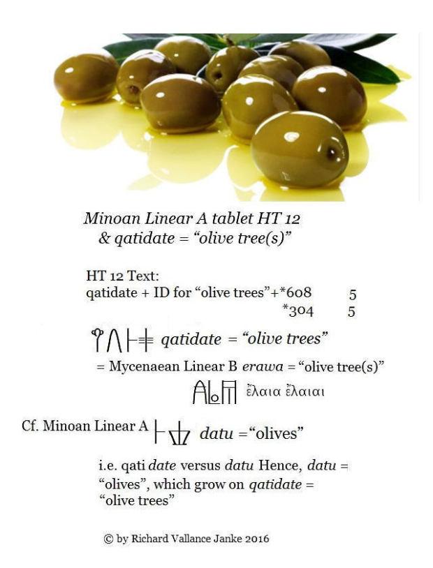 linear-a-ht-12-qatidate-olive-tree