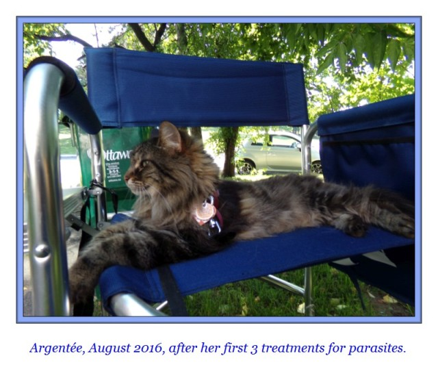 argentee-my-cat-august-2016