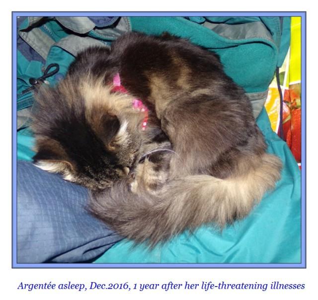 argentee-my-cat-december-2016
