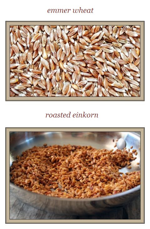 roasted einkorn and emmer wheat