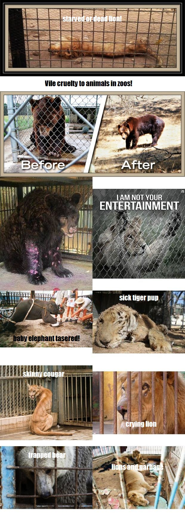 composite vile cruelty to animals in zoos