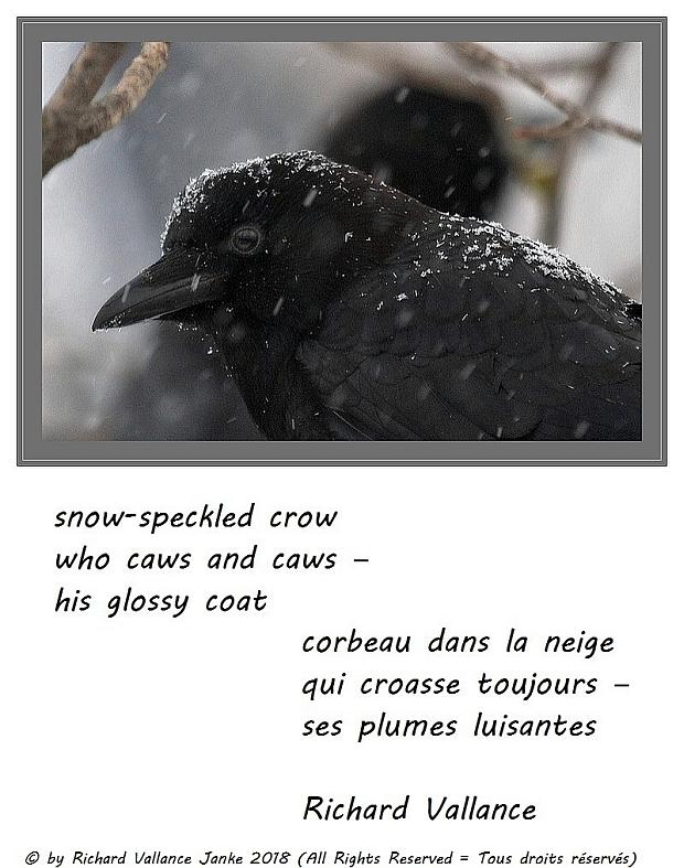 crow in the snow haiku