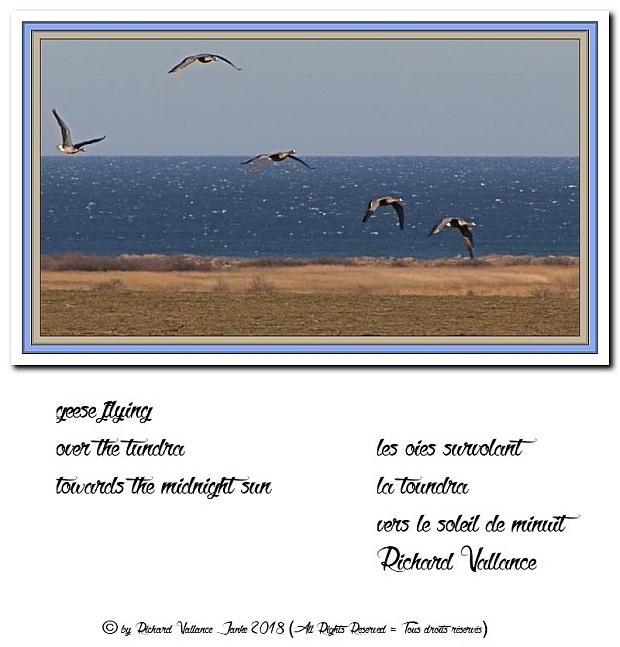 geese tundra620