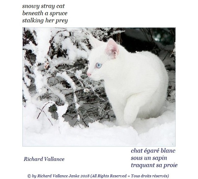 haiku white stray cat