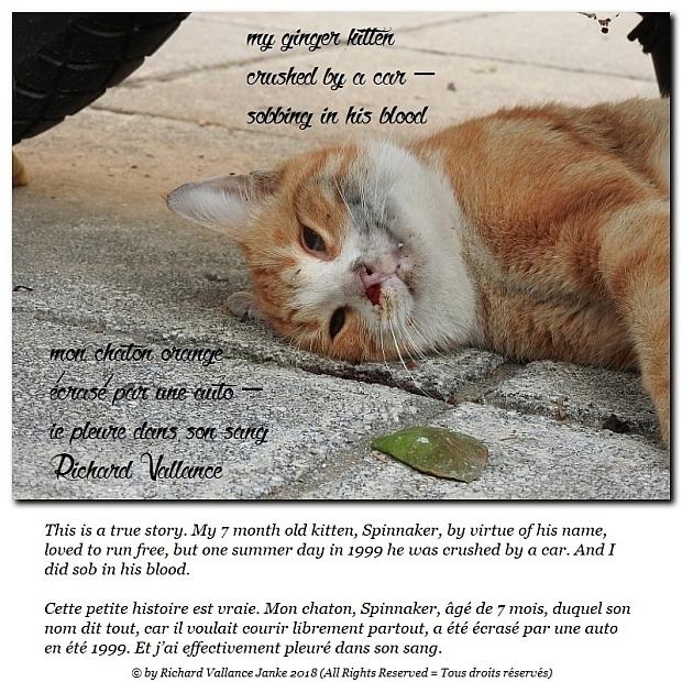 my ginger kitten620