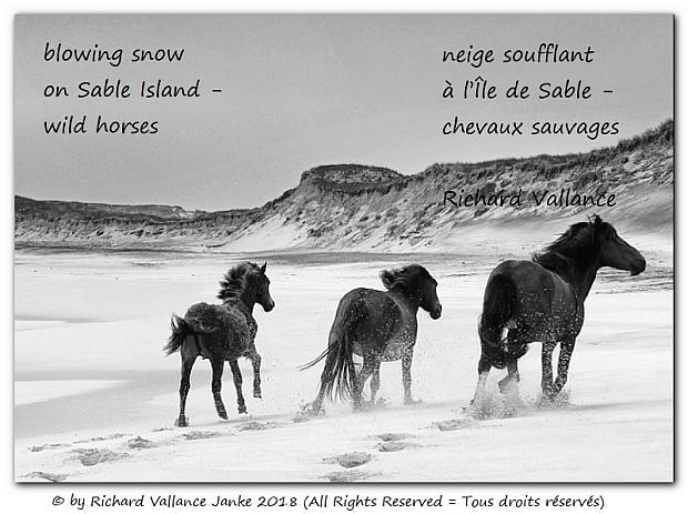 Sable Island haiku620