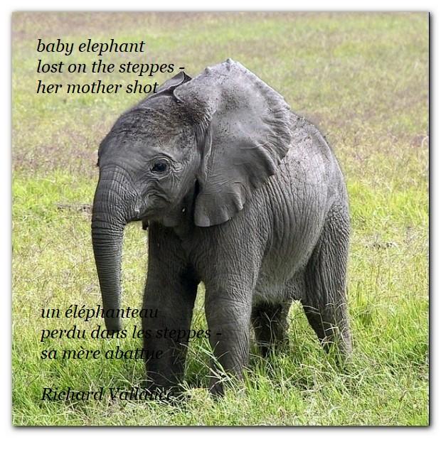 baby elephant haiku