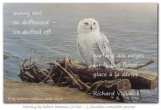 bateman-snowy-owl-on-driftwood620