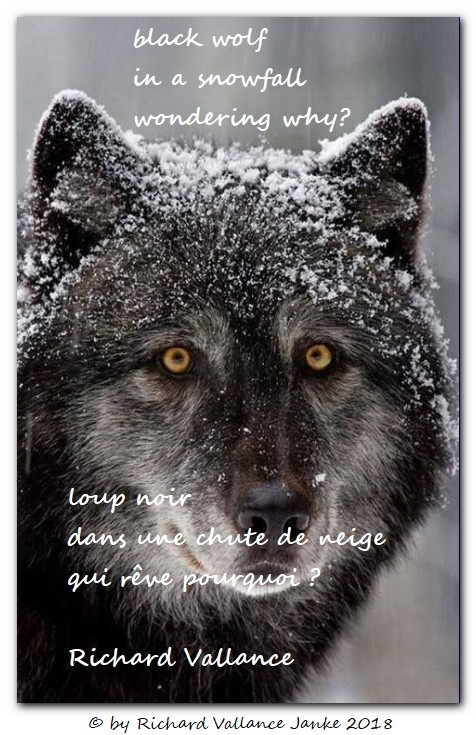 black wolf in the snow haiku