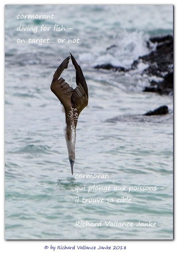 cormorant haiku
