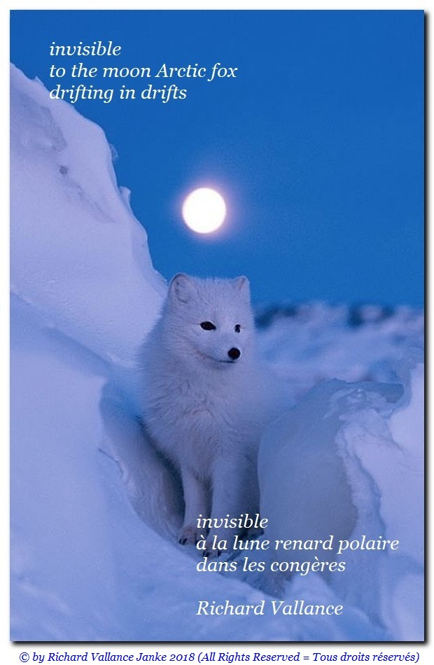 haiku arctic fox