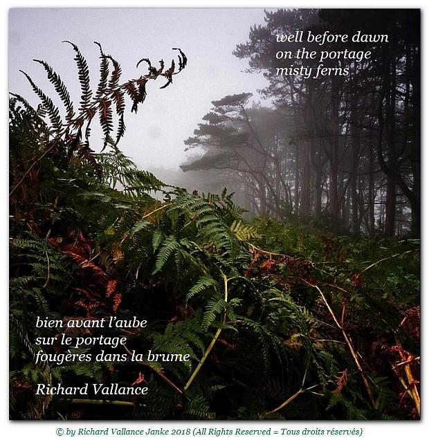 haiku ferns in the mist