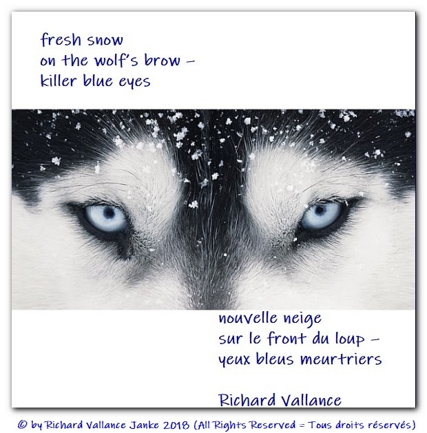 haiku snow on the wolfs brow