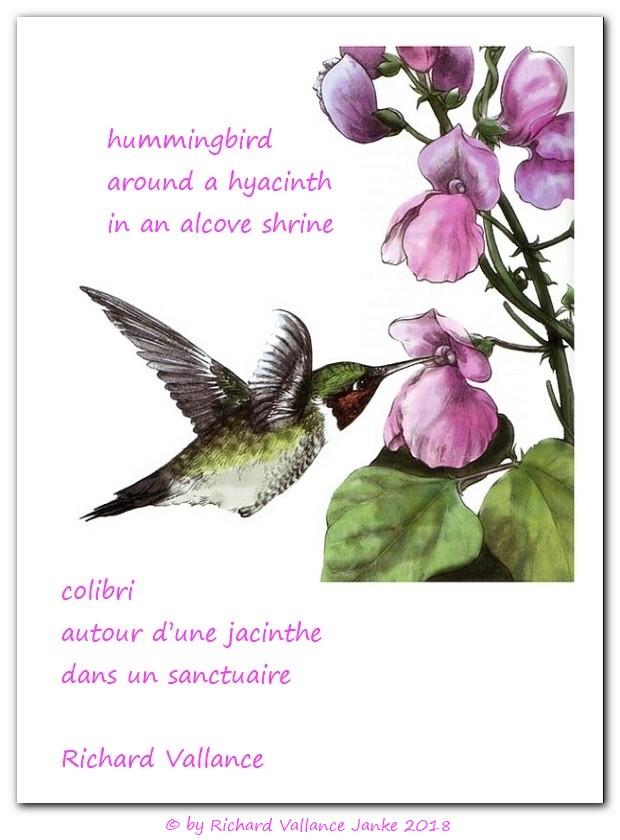 hummingbird hyacinth alcove