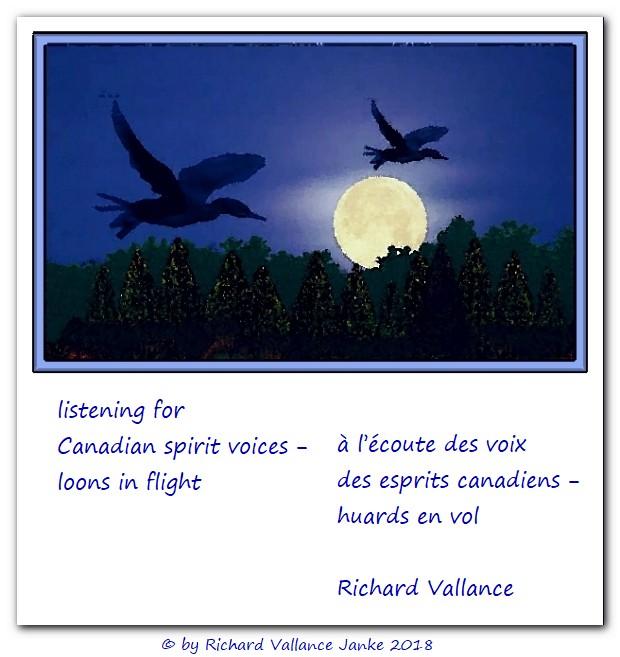 loons in flight haiku