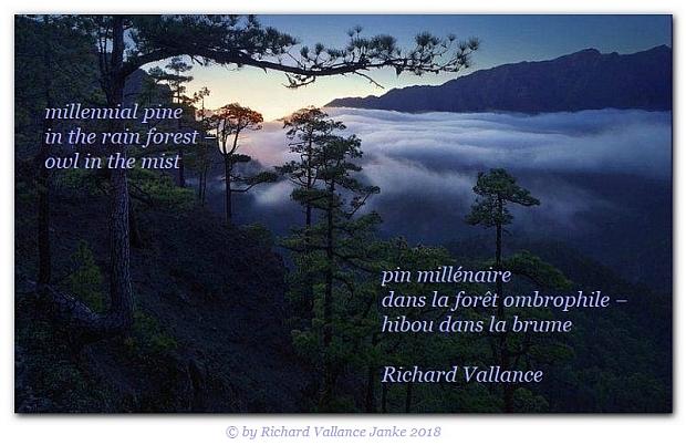 millennial pine haiku620