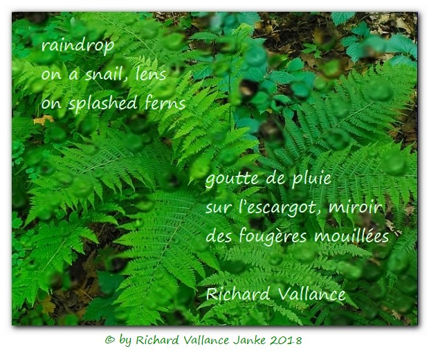 snail ferns haiku