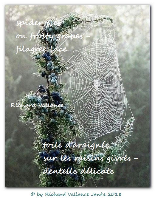 spider web haiku