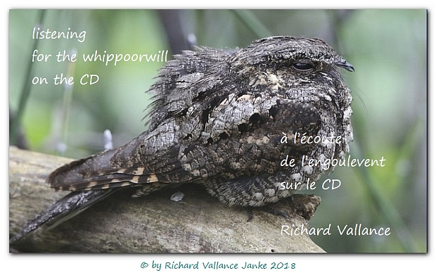 whippoorwill620