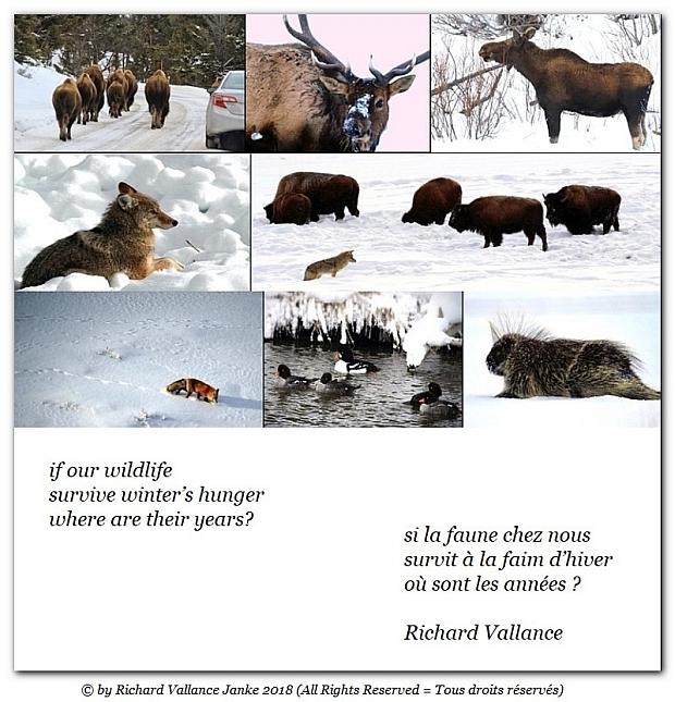 wildlife winter collage haiku 620