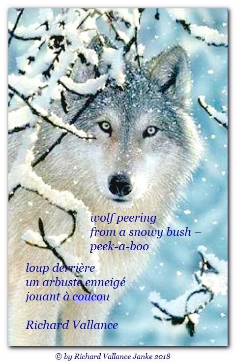 wolf bush haiku