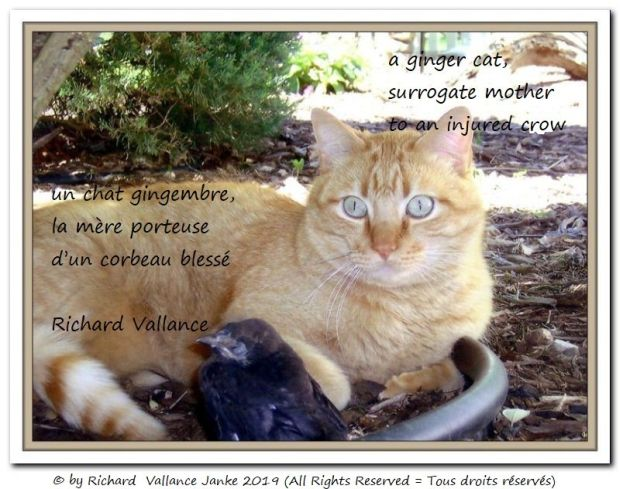 cat surrogate mother 620
