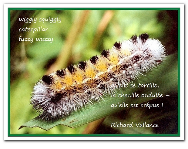 caterpllar haiku 620