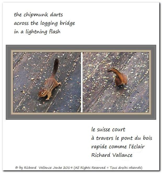 chipmunk darts haiku 620