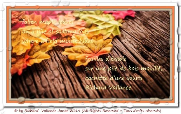fallen maple leaves haiku 620