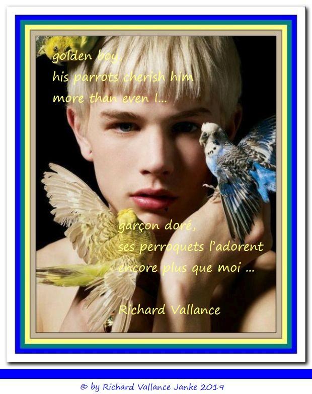 golden boy with parrots