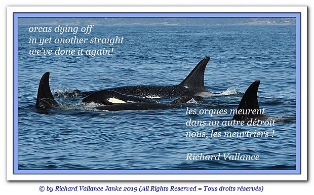 orcas 620