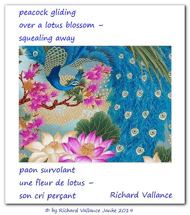 peacock lotus haiku