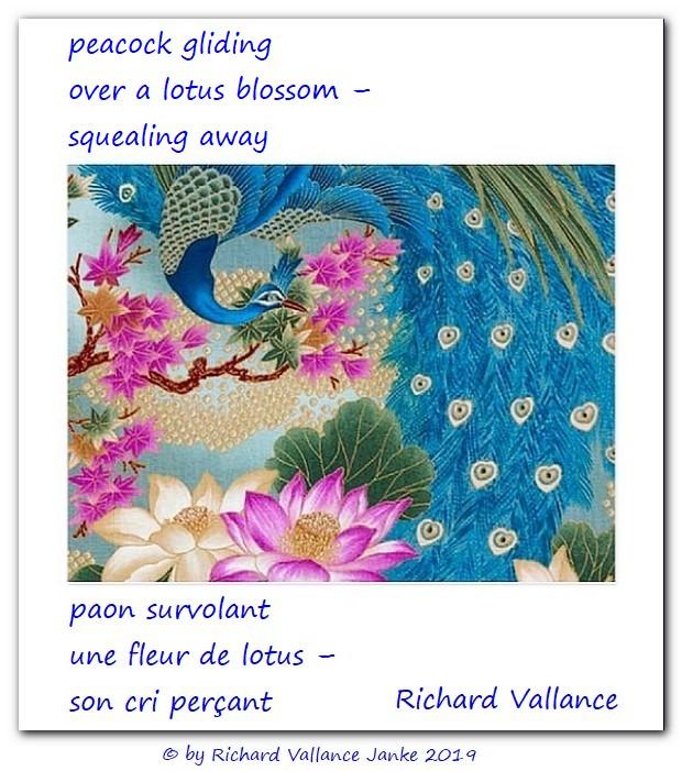 peacock lotus haiku