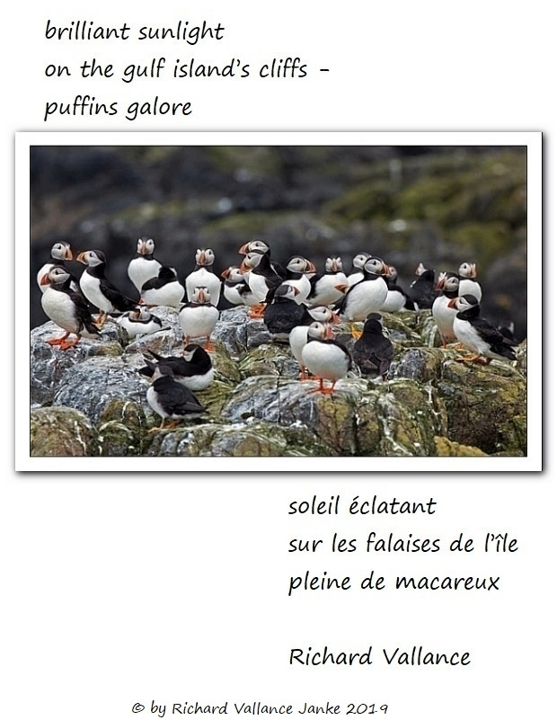 puffins galore haiku