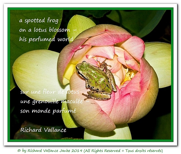 spotted frog haiku 620