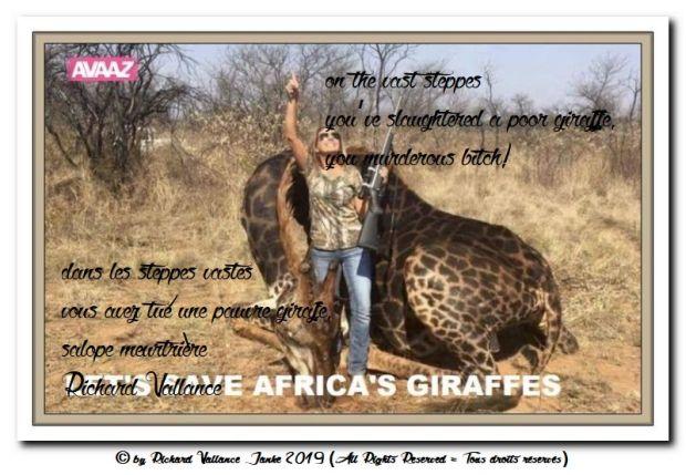 Africas giraffes 620