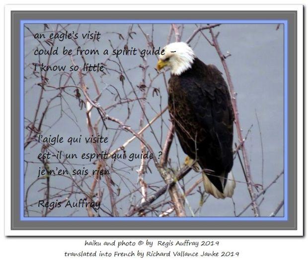 an eagle's visit 620