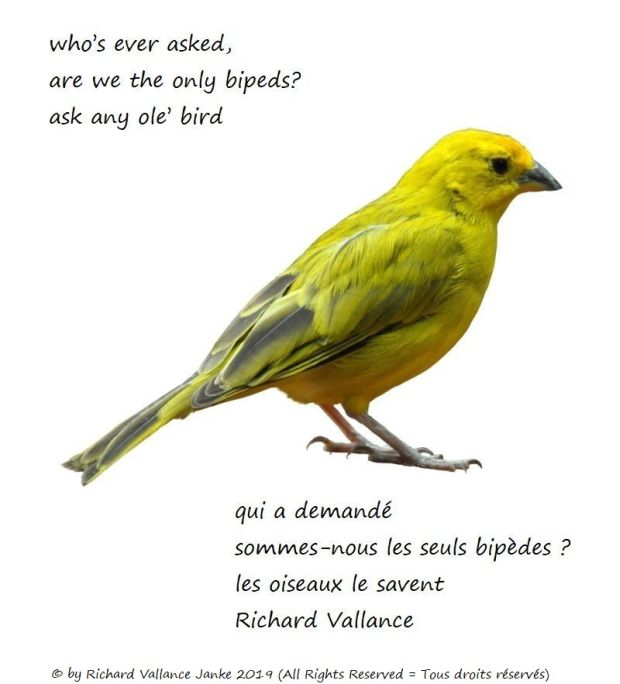 ask any bird senryu 620