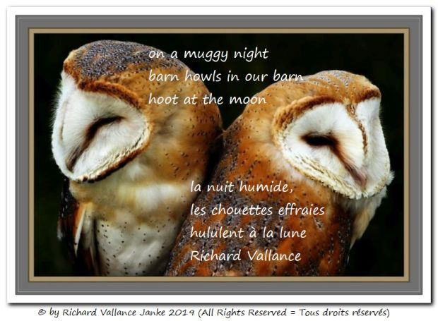 barn owls haiku 620