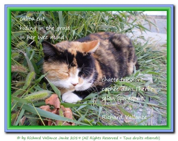 calico cat hiding in the grass 620