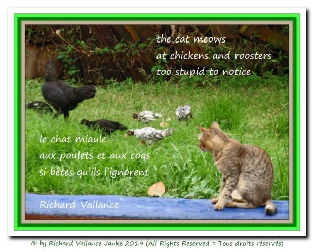 cat-and-chickens 620