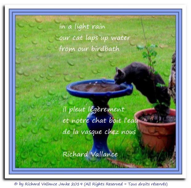 cat drinks bird bath water 620