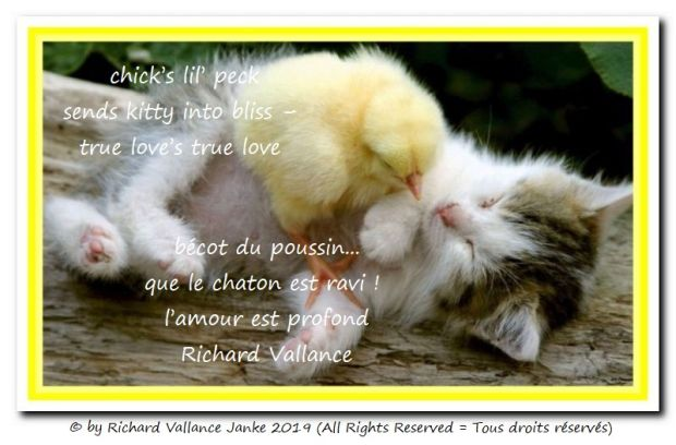 chick and kitten haiku 620