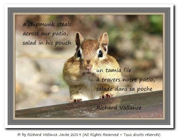 chipmunk haiku 620