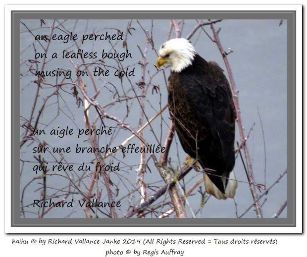 eagle on a bough 620