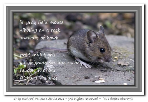 field mouse haiku 620