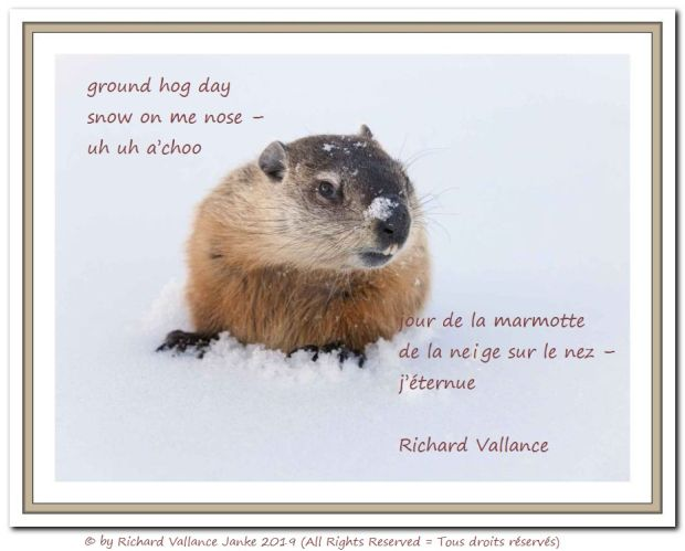 ground hog day haiku 620